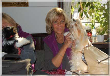 Ausstellung Altena | Hundezucht von Martina Dase ver-la-luz - Golddust und Biewer Yorkshire Terrier a la Pom Pon
