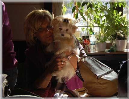 Gini und Ausstellung Sunny 03.10 025 | Hundezucht von Martina Dase ver-la-luz - Golddust und Biewer Yorkshire Terrier a la Pom Pon
