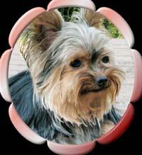 L3 | Hundezucht von Martina Dase ver-la-luz - Golddust und Biewer Yorkshire Terrier a la Pom Pon