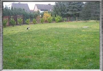 wir4 | Hundezucht von Martina Dase ver-la-luz - Golddust und Biewer Yorkshire Terrier a la Pom Pon