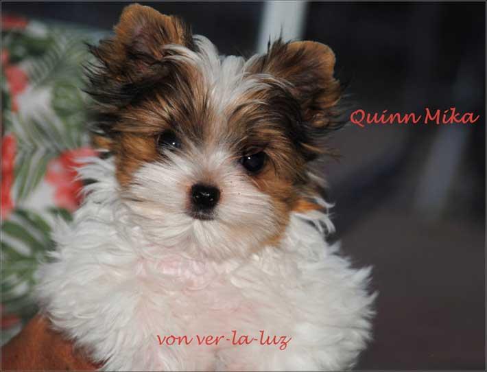 Quinn Mika 14 Wochen alt Foto 1