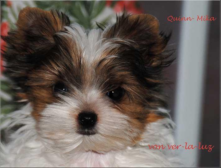 Quinn Mika 14 Wochen alt Foto 2